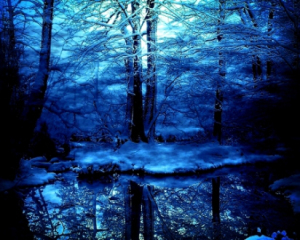 Blue-Winter-Threes-Forrest