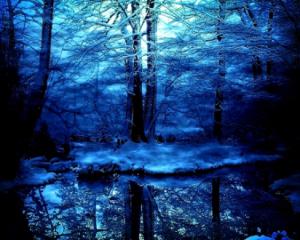 Blue-Winter-Threes-Forrest
